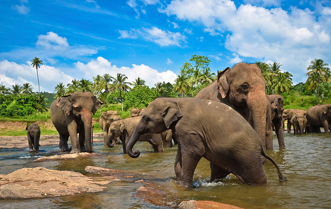 Шри-Ланка! Остров сокровищ в Индийском океане!